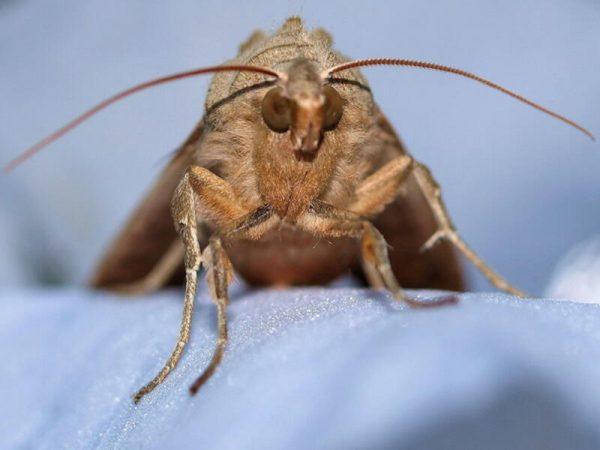 Moths Pest Controller Services